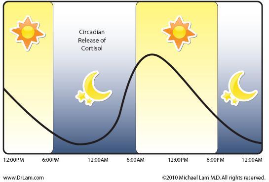 Cortisol_Diagram